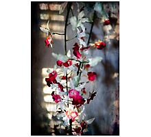 Orchid with diffused light Photographic Print