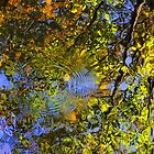 Ripples in Reflections I by HDTaylor