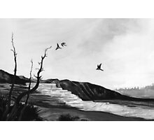 tree swallows in yellowstone Photographic Print