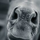 Horse nose macro by Asher Haynes