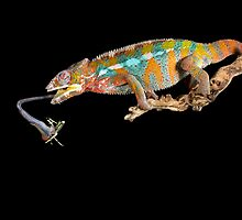 The chameleons lunch by Angi Wallace