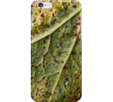 Fall Colors iPhone Case/Skin