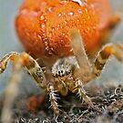 Hermit Cra.... I mean Spider! by starwarsguy