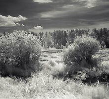Ir river by bogfl