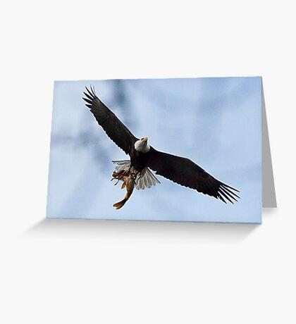 Meal Delivery,  Bald Eagle, Jordan Lake, NC Greeting Card