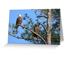 First Adventure, Parent and Fledgling, Bald Eagle, Jordan Lake, NC Greeting Card