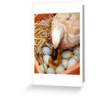 A Mothers Kiss  ~ Newborn Duckling ~ Greeting Card