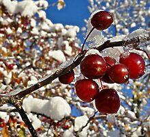 winter by gatheringwonder