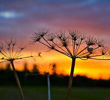 Rainbow Sunset by CamHphotogrpahy
