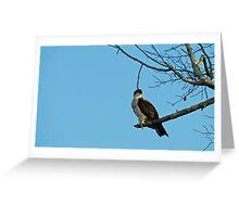 Hawk Perched 3 Greeting Card