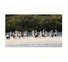 Pelicans on the Tweed Art Print