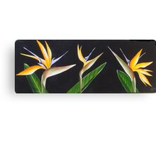 Three sterelitzias Canvas Print