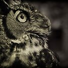 Great Horned Owl by Ali Zaidi