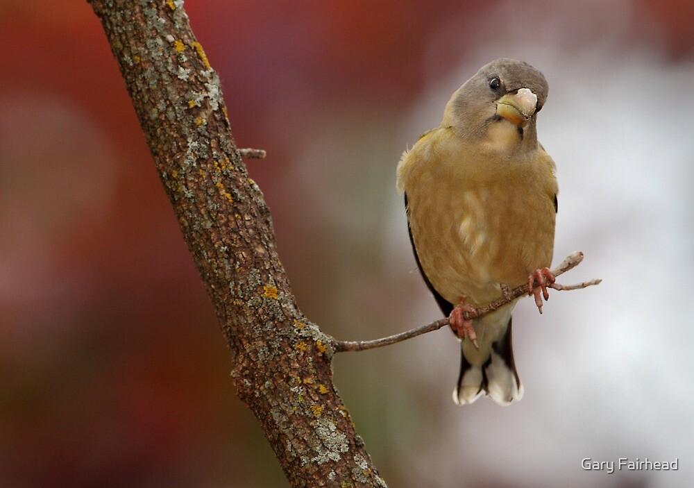 Light As A Feather by Gary Fairhead