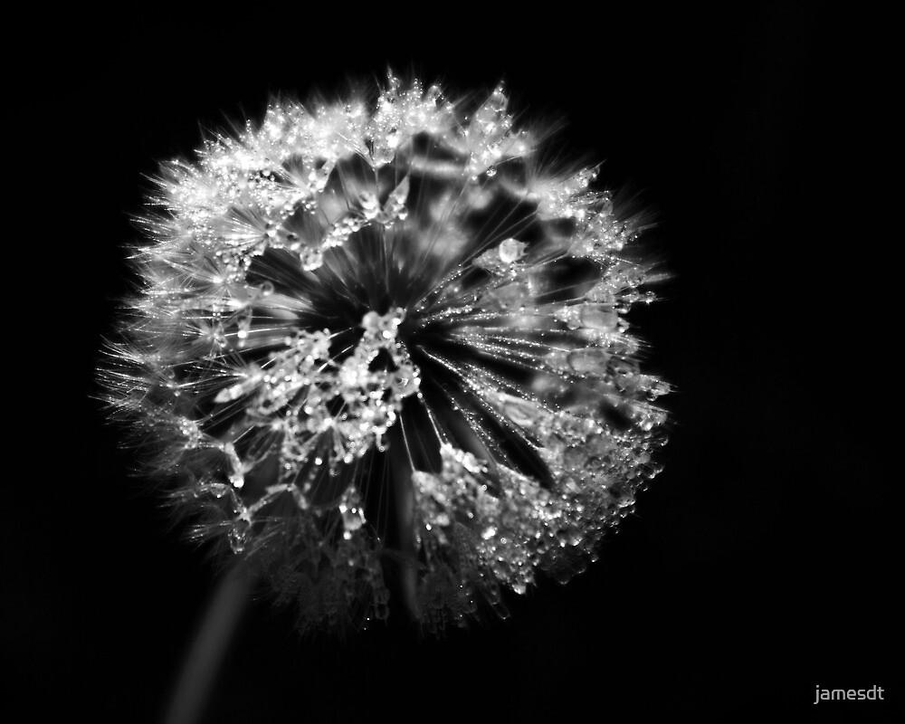 Dandelion in Monochrome by jamesdt