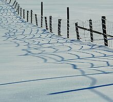 Fence Shadows Snow Winter Farm by Jamie Roach