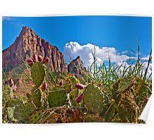 Cacti Canyon Poster