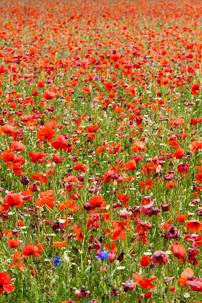 Surrounded by poppies (portrait crop) by Andrew Jones
