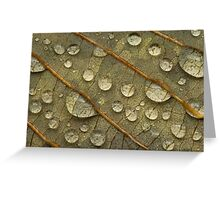 Water on Leaf Greeting Card
