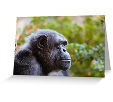Chimpanzee - deep in thought! Greeting Card