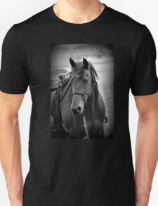 Beautiful Horse Photograph T-Shirt