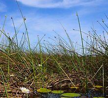 Okavango Delta by Jessica Henderson