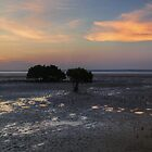Mangrove evening by athex