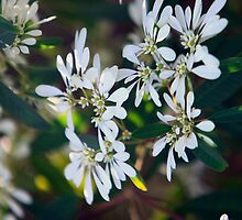 White flowers by James mcinnes