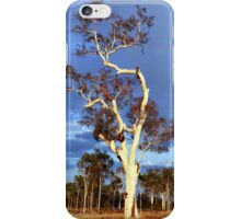 Sun Seeker iPhone Case/Skin