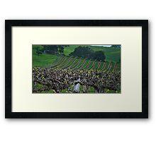 Barossa Vineyard Framed Print
