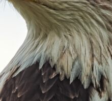 American Bald Eagle Portrait Sticker