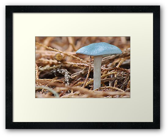 Clitocybe Odora   [ Aniseed  Toadstool ] by relayer51