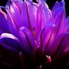 Purple Flower by tmac