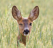 Winking deer [iPhone/iPod case] by Mariann Rea