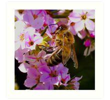 Pollination On Pink Art Print