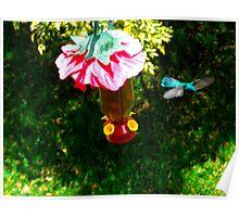 Sparkling Violetear Hummingbird Poster