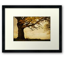 When the Fairies Come Out to Play Framed Print