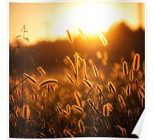 Morning Glow Poster