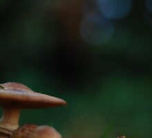 Mushroom awaiting Alice by Martina Kausch