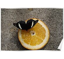 Black and white butterfly Poster