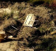 Debris along the Tide Line by Hope Ledebur
