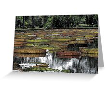Waterlily Pond Greeting Card