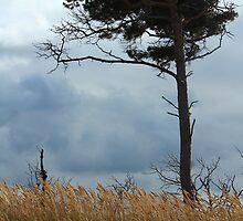 Wind Dodger by karina5