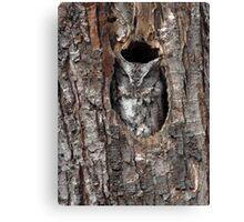 Grey Morph / Screech Owl Canvas Print