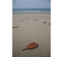 The Leaves beneath my feet Photographic Print