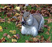 Tasty meal Photographic Print