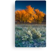 First Light Of Fall Canvas Print