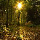 Autumn Sunburst by John Dunbar