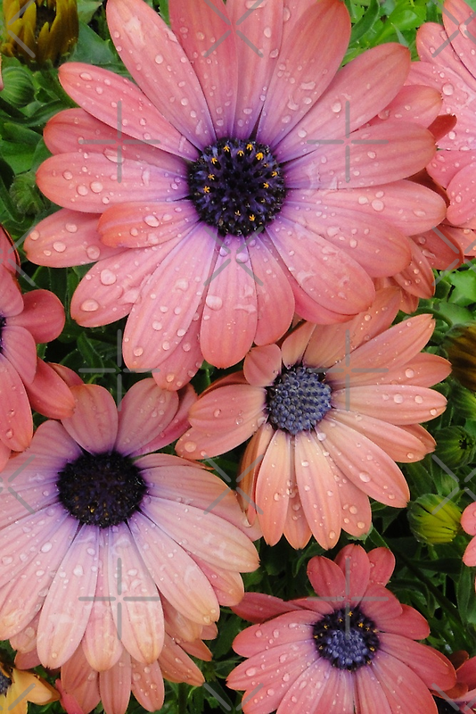 Flowers In The Rain by Barrie Woodward