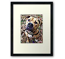 Pit Bull Rescue Beauty (1) Framed Print